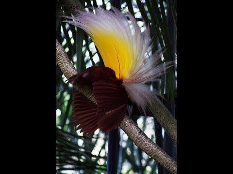 12 Most Amazing Exotic Birds