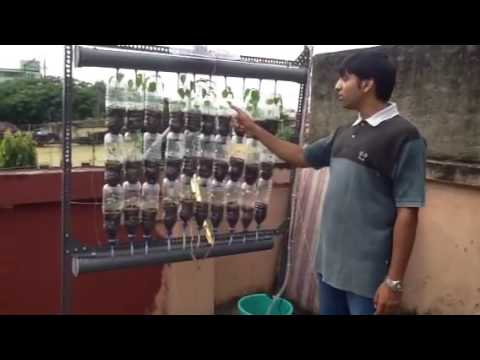 Hydroponics farm made of recycled bottles in kolkata