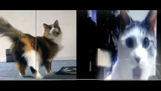 """OMG cat meets """" GYPSY The Sex Kitten"""""""