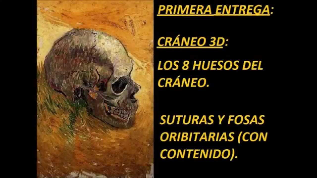 Cráneo 3D: Huesos, suturas y fosas orbitarias (contenido) - YouTube