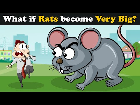 What if Rats become Very Big? + more videos | #aumsum #kids #children #education #whatif