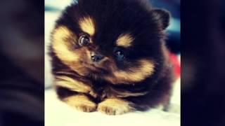 Милые фото животных :)