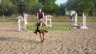 Parcours de saut avec Scooby!