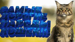 #Топ5самыхдорогихпородкошек Топ 5 самых дорогих пород кошек.