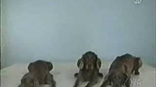 Sesame Street - Wegman Dogs Demonstrate 3