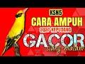 Cara Menjinakan Burung Kepodang Rajin Bunyi Siang Malam Burung Kepodang Gacor  Mp3 - Mp4 Download