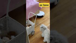 Our house @FunnyVideos