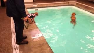 Puppy's First Swim