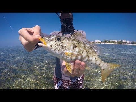 Emperor Fishing In Maafushi Maldives