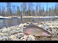 Рыбалка твоей мечты Весна 2018 Изба Тайга Медведь mp3