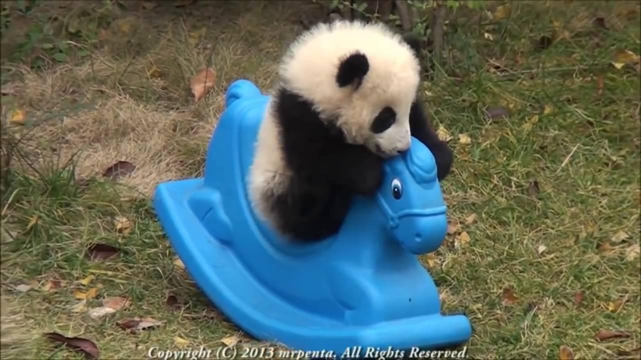 Tierno Panda bebe jugando con caballito de juguete - YouTube