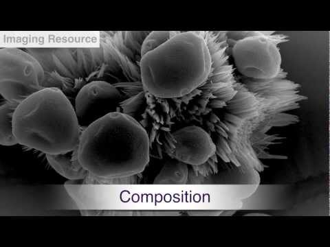 Imaging Resource Scanning Electron Microscopy and Material Analysis