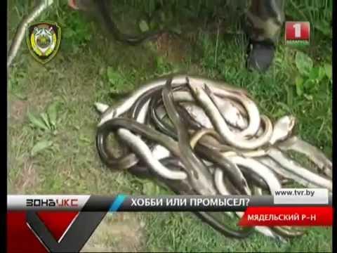 рыбалка в белоруссии на угря