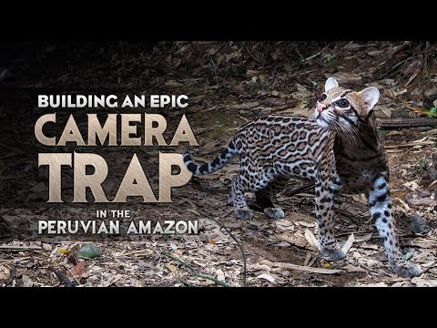 Building an Epic Camera Trap In The Peruvian Amazon