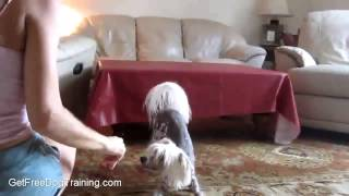 The Online Dog Trainer Review - How To Become A Dog Trainer