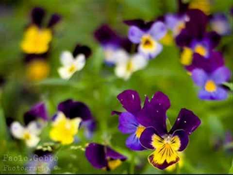 bouquet-baustelle-fleurdumal23