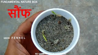 Cover images सौंफ उगाये घर पर  Step By Step Seed to plant information. How to grow FENNEL plant at home easily.