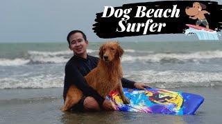 SURFING DOG: CREAMY ENJOYING THE WAVES