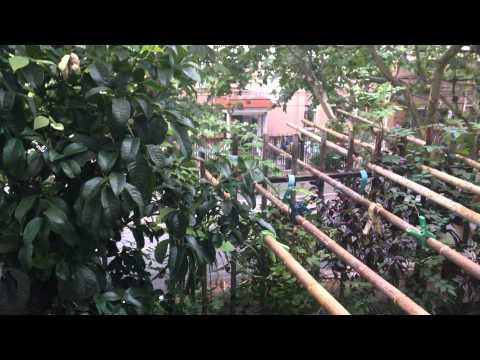 Le jardin de Florence en Chine