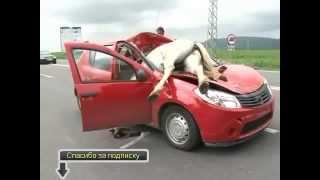 ДТП и Аварии, с животными