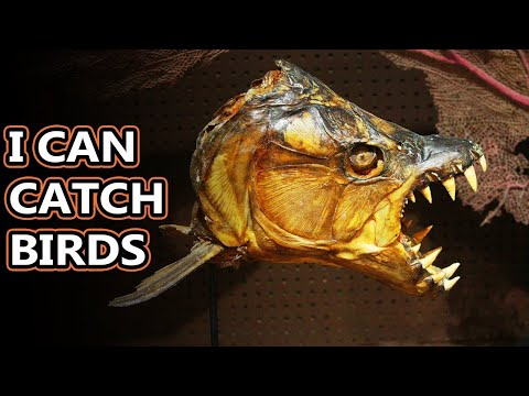 Tigerfish Facts: A Face Only A Mother Could Love | Animal Fact Files