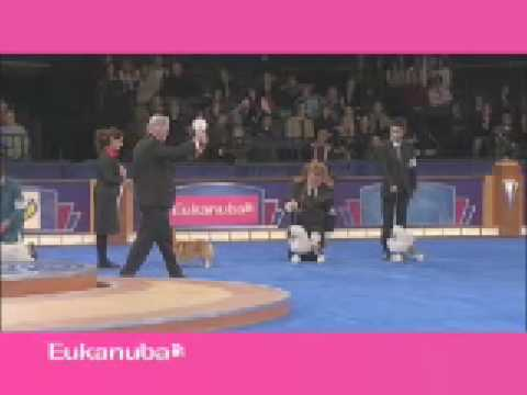 Eukanuba World Challenge 2008