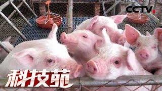 《科技苑》猪粪里淘金 20180903 | CCTV农业