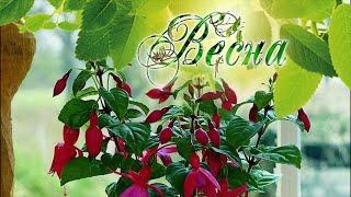 Правила весеннего ухода за комнатными растениями. На заметку начинающему цветоводу!