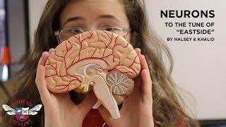 Neurons - Science Rap Academy