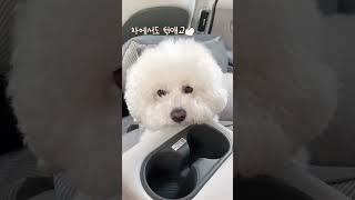 차 잘타는 강아지(카시트 훈련이 뭐죠?)
