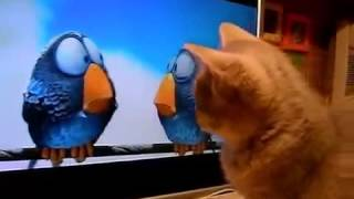 Смотреть Всем!! Кот Смотрит Мультик!Приколы с Котами!See All! Cartoon cat stares! Fun with cats!