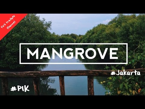Taman Mangrove PIK Jakarta Indonesia - Unofficial Video Holiday