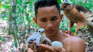 Primitive Technology: Rescue a little Bird (Hawk) and nurture in the forest
