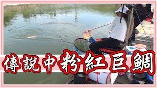 台灣鯛竟然有粉紅色的!用手竿細線搏大魚!一直斷線脫鉤到底能不能釣到呢?【老婆】