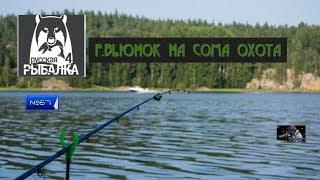 Стрим РУССКАЯ РЫБАЛКА 4 порыбачим 67 Р ВЬЮНОК НА СОМА ОХОТА