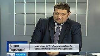 Внедрение электронной системы «Меркурий» на Колыме: интервью
