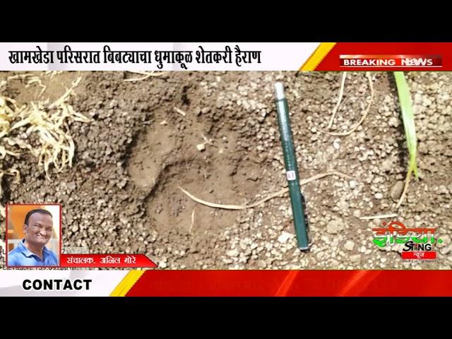 शिरपूर : खामखेडा परिसरात बिबट्याचा धुमाकूळ शेतकरी हैराण