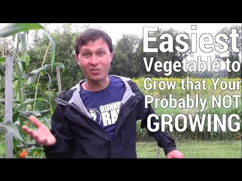 Exceptionnel Easiest Vegetable To Grow In The Garden Youu0027re Probably Not Growing    YouTube