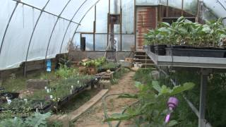 One small family farm feeds hundreds [Delaware Online News Video]