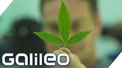 Krasser Cannabis-Boom in den USA | Galileo | ProSieben