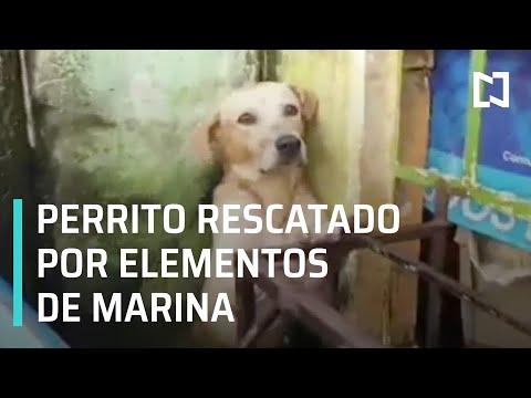 Salvan a un perrito de las inundaciones en Tabasco - Expreso de la Mañana
