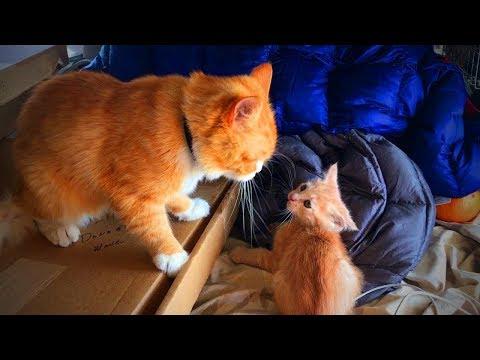 Funny Cats and Kittens 😂🐱 Funny Cats and Kittens Fails (Full) [Funny Pets]