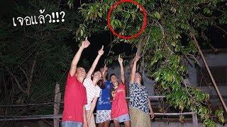 """มองขึ้นไปบนต้นไม้!!? เจอของดีอิสาน!!? """"หาไต้แมงจินูนแดง"""" อยู่ต้นผักติ้ว เฮียนแม่ใหญ่เพ้าคนงาม"""