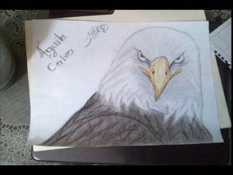 Dibujo De Águila Calva - YouTube