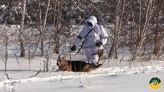 Аерозольне маскування та собаки