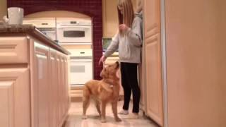 Dog Trained In Sign Language