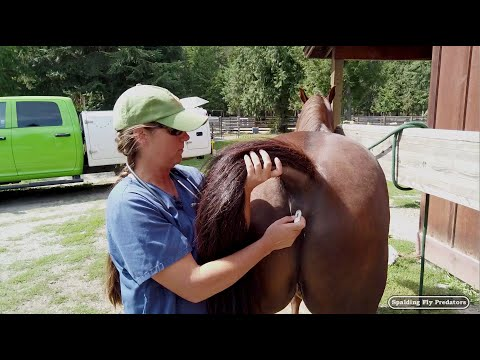 Helping Your Equine