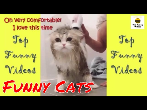 Funny Cats Compilation 2017 [Special Version with Funny Captions] P16 🐱Best Funny Cat Videos Ever