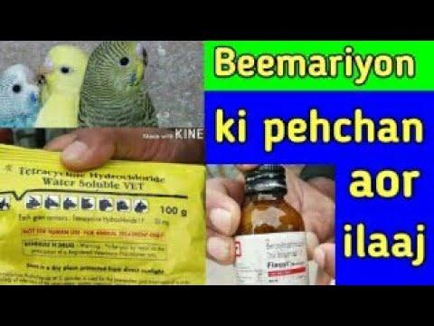 Australian parrots diseases and medicines