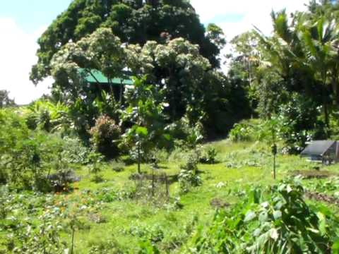 7 of 7 Life on an Organic Farm in Hana Maui, Hawaii - The Farm Tour